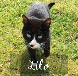 Lilo, Chat à adopter