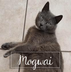 Mogwaï, Chat à adopter