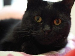 Nilos, Chat à adopter