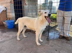 Turpin, Chien à adopter