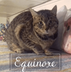 Equinoxe, Chaton à adopter