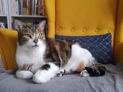 Dexter, Chat à adopter