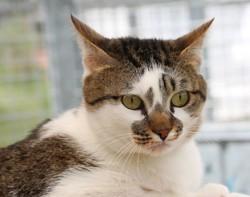 Banjo, Chat gouttière à adopter