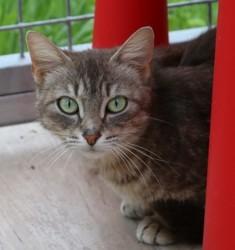 Guccy, Chat gouttière à adopter