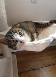 Kéolis, Chat européen à adopter