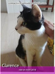 Clarence, Chat à adopter