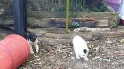 Plusieurs chatons, Chaton européen à adopter