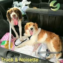 Truck et noisette ensemble, Chien à adopter
