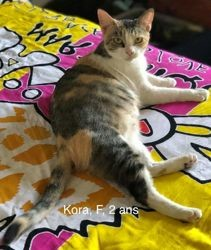 Kora, Chat à adopter