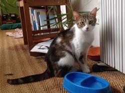 Xena, Chat à adopter