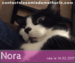 Nora, Chat à adopter