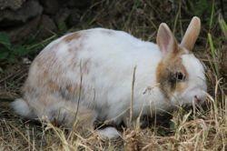 Caramiel, Animal à adopter