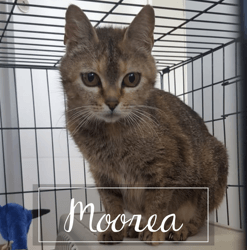 Moorea, Chat à adopter