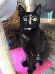 Malou, Chat à adopter