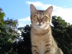 Nelsie, Chaton à adopter