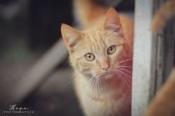 Buddy (fiv+), Chat à adopter
