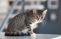 Carly, Chaton à adopter