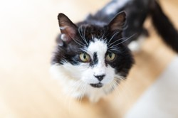 Leclerc, Chat à adopter