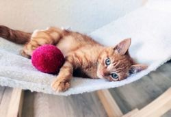 Link, Chaton à adopter