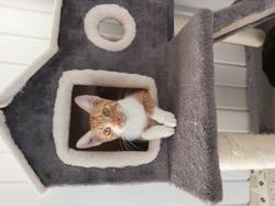 Rustine, Chat à adopter