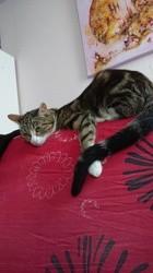 Minouche, Chat à adopter
