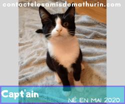 Capt'ain, Chaton à adopter