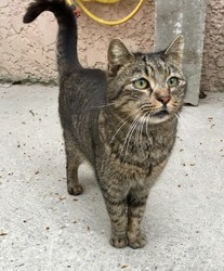 Gribouille, Chat à adopter