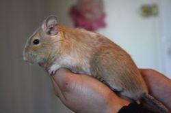 Verdict, Animal à adopter