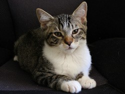 Koboi, Chaton à adopter