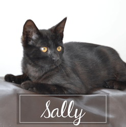 Sally, Chaton à adopter
