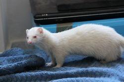 Ziua, Animal à adopter