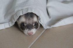 Sven, Animal à adopter