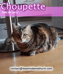 Choupette, Chat à adopter