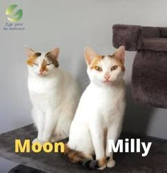 Moon et milly, Chat à adopter