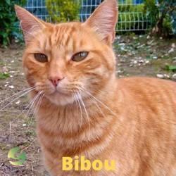Bibou, Chat à adopter
