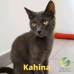 Kahina, Chat à adopter