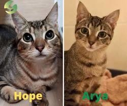 Arya et hope, Chaton à adopter