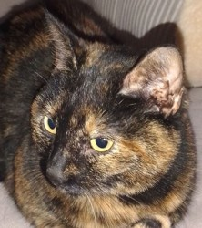 Grelinette, Chat à adopter