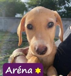 Arena, Chiot à adopter