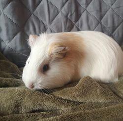 Sierra, Animal à adopter