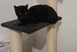 Rhea, Chaton à adopter