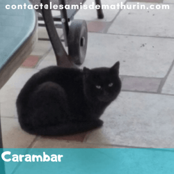 Carambar, Chaton à adopter