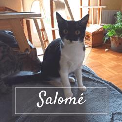 Salome, Chaton à adopter