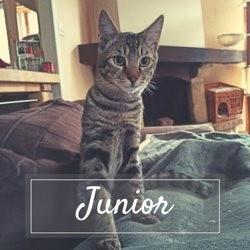 Junior, Chaton à adopter
