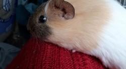 Rasmuss, Animal à adopter