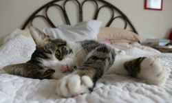Phinou, Chat à adopter