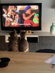 Yogi et pixelle, Chaton européen à adopter