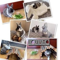 Louvto, Animal à adopter