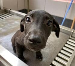 Austin, Chiot à adopter