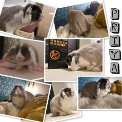 Priya, Animal à adopter